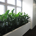 Plants for interiors